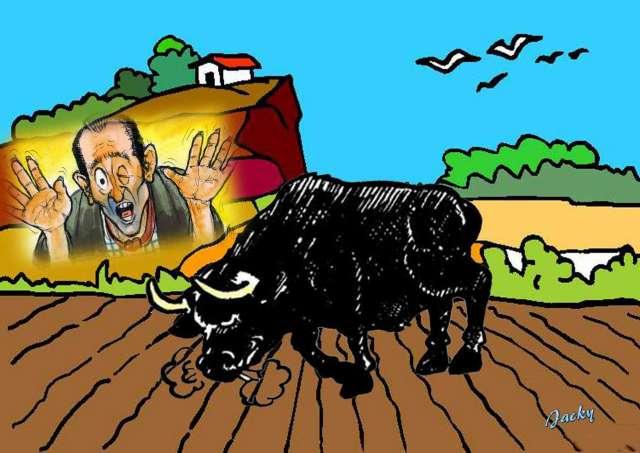 Dodophe  avec le taureau dans le champ